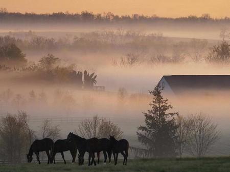Fog Why Does Fog Form
